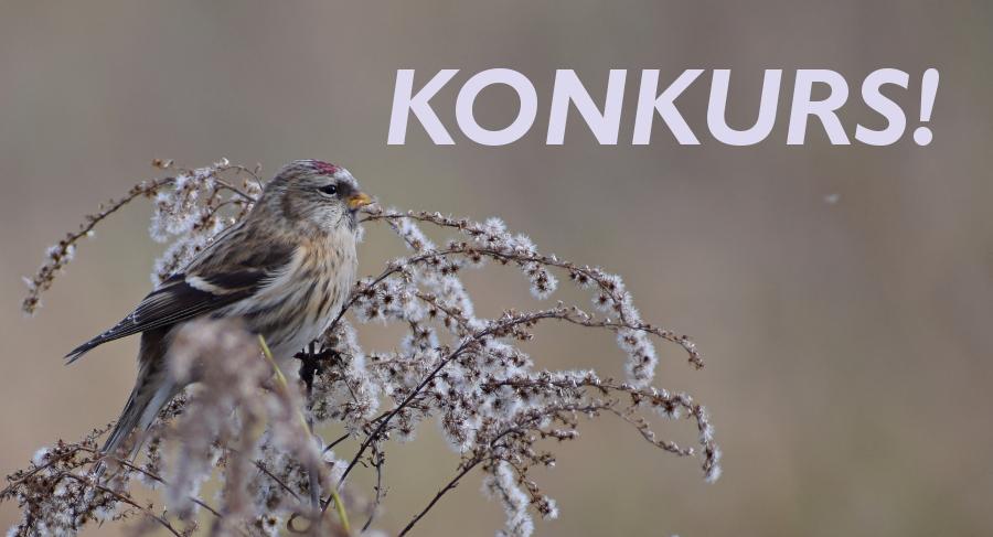 Zapraszamy dzieci do udziału w X Powiatowym Konkursie Ornitologicznym